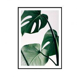 &fab botanisch poster monstera